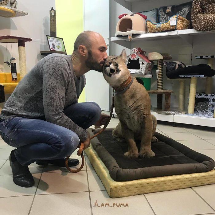 Puma Als Haustier